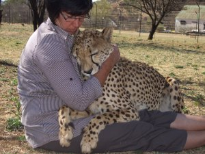 Effects of rearing method on stereotypical behaviours in cheetah