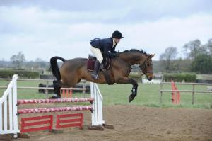 Do different shades effect stress indicators in the jumping horse?